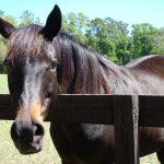 retirement-home-horses-Crafty