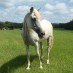 retirement-home-horses-Grace