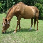 retirement-home-horses-Lady-Soul