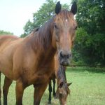retirement-home-horses-Welaka