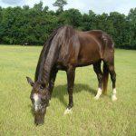 retirement-home-horses-gertie1
