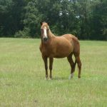 retirement-home-horses-harriet2