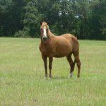 retirement-home-horses-harriet2