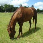 retirement-home-horses-joan1