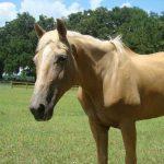 retirement-home-horses-knox1