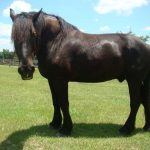 retirement-home-horses-lance1