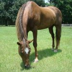 retirement-home-horses-maggy