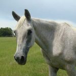 retirement-home-horses-snowflake