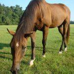 retirement-home-horses-sponsor-Dewey