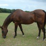 retirement-home-horses-sponsor-benji