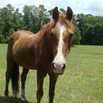 retirement-home-horses-sponsor-butch