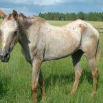 retirement-home-horses-sponsor-clariant