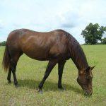 retirement-home-horses-sponsor-flicka