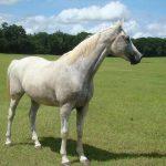 retirement-home-horses-sponsor-hannah