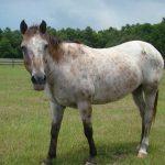retirement-home-horses-sponsor-mashantie