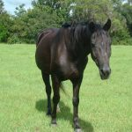 retirement-home-horses-sponsor-rhoda