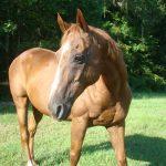 retirement-home-horses-sponsor-solo