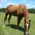 retirement-home-horses-sponsor-sunshine