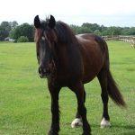 retirement-home-horses-arthur