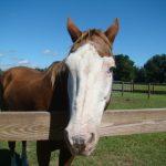 retirement-home-horses-frisco