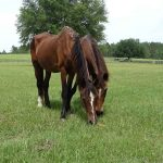 retirement-home-horses-gretchen-lola