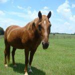 retirement-home-horses-pip