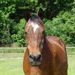 retirement-home-horses-polo