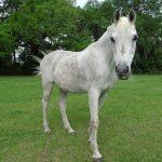 retirement-home-horses-sky