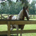 retirement-home-horses-sly