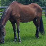 retirement-home-horses-stella-I