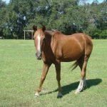 retirement-home-horses-yoshi